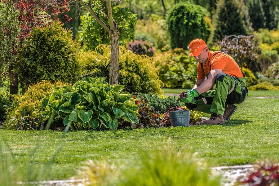Helpful tips for designing a landscape with trees
